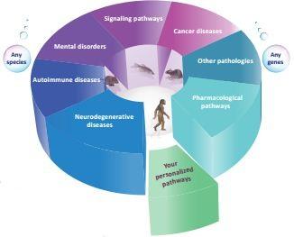 signaling pathways flyer