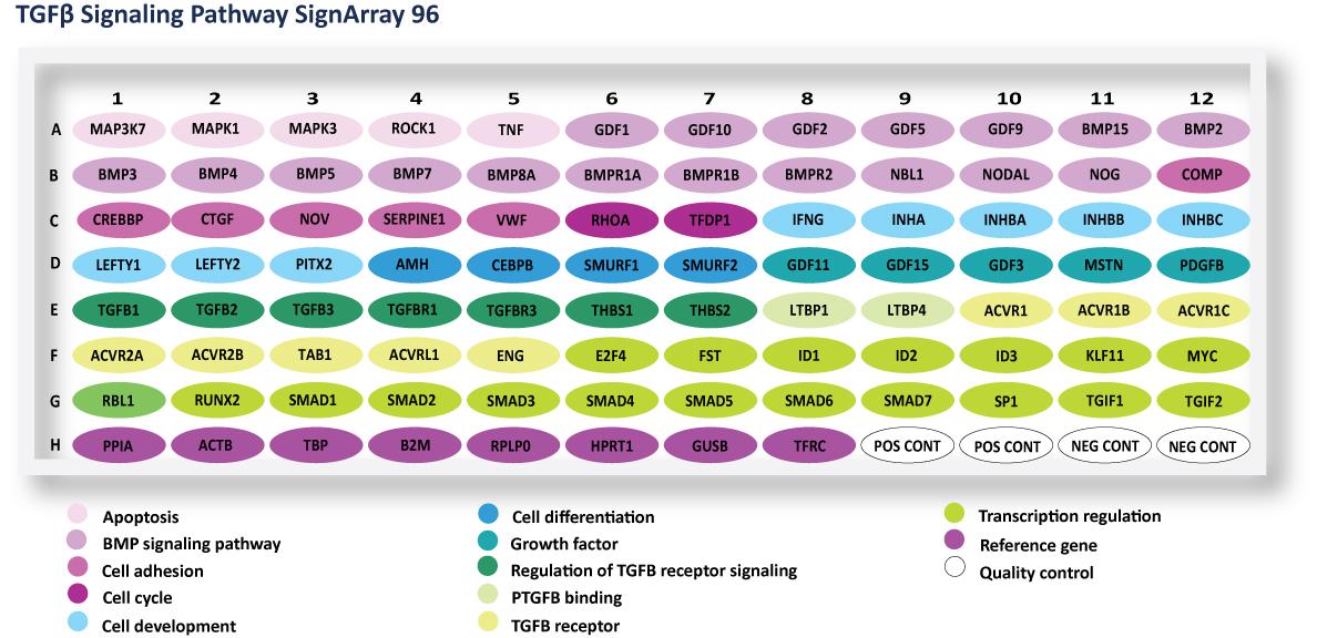 TGFbeta Signaling Pathway